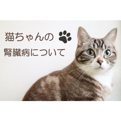 猫の腎臓病