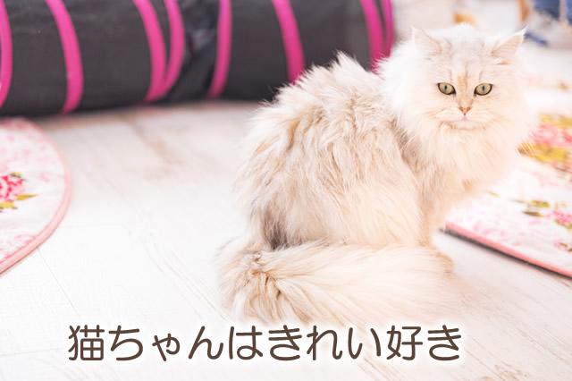 きれい好きな猫