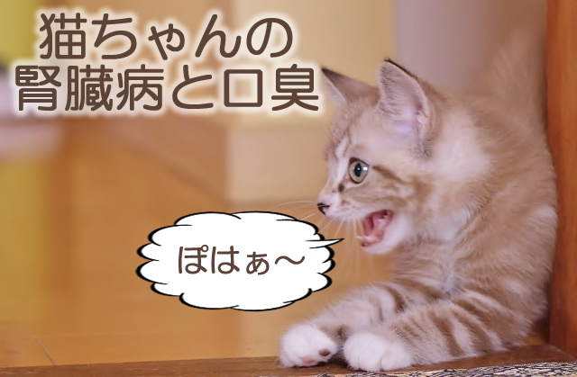 猫の腎臓病と口臭